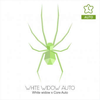 White Widow autofloreciente - Core Seeds